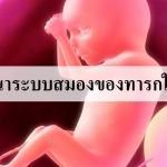 การพัฒนาระบบสมองทารกในครรภ์ !!