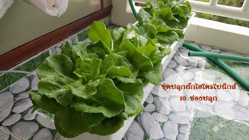 ชุดปลูกผักไฮโดรโปนิกส์ (น้ำนิ่ง1)