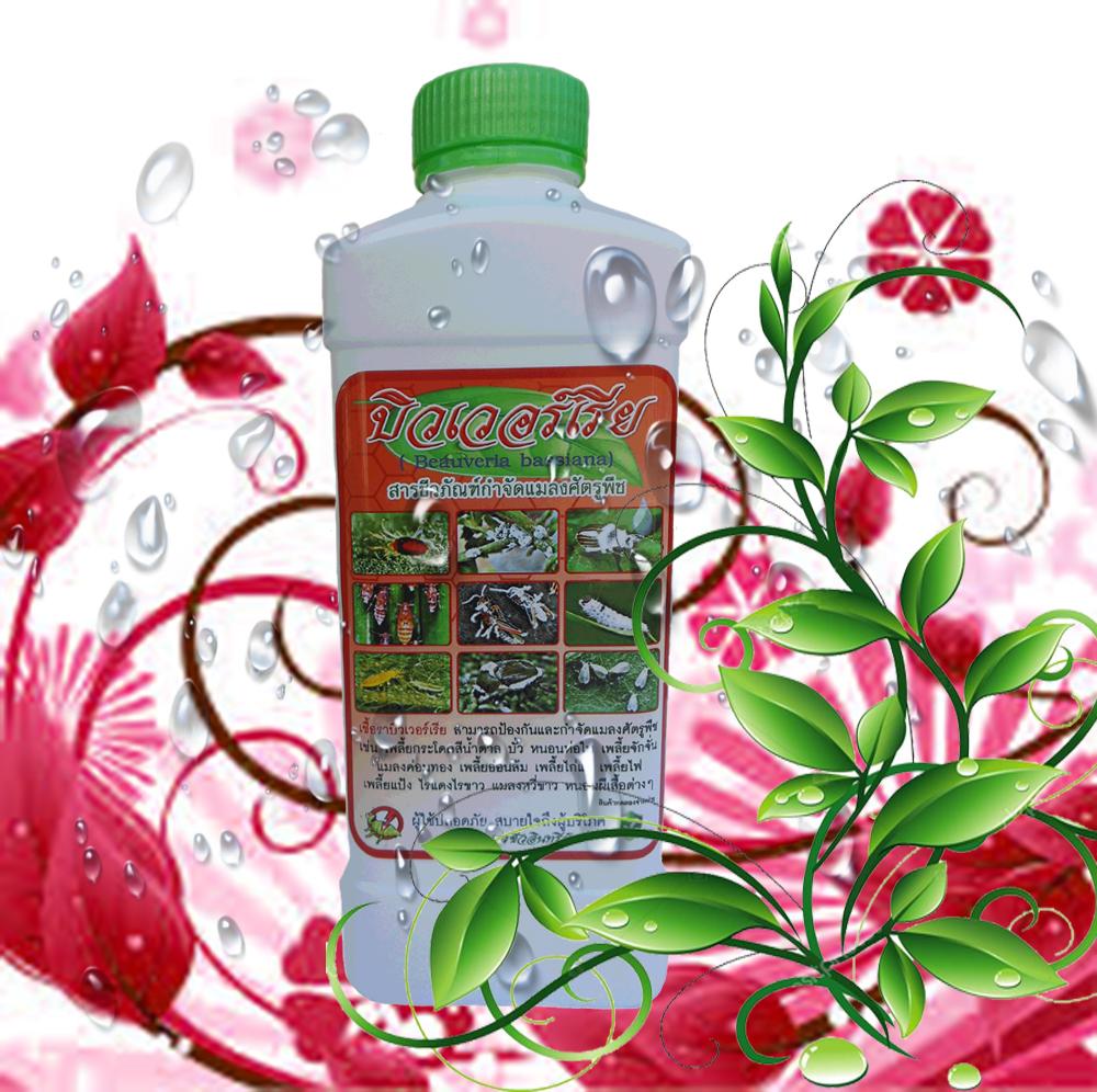 เชื้อราบิวเวอร์เรีย ชนิดน้ำ กำจัดแมลงศัตรูพืช