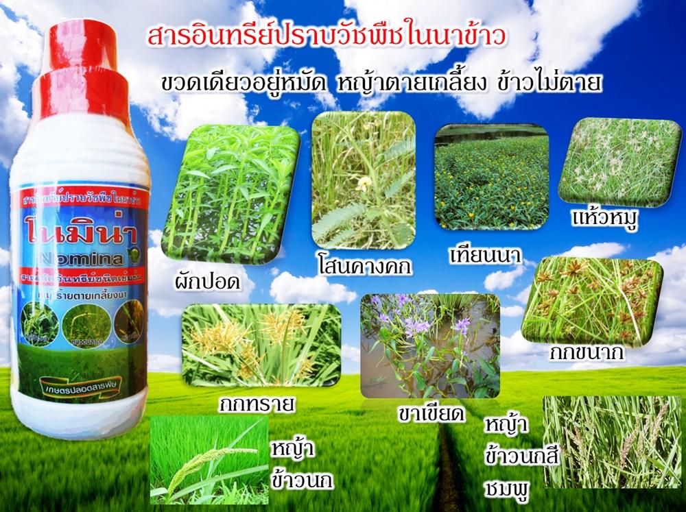 โนมิน่า สารอินทรีย์กำจัดวัชพืชในนาข้าว