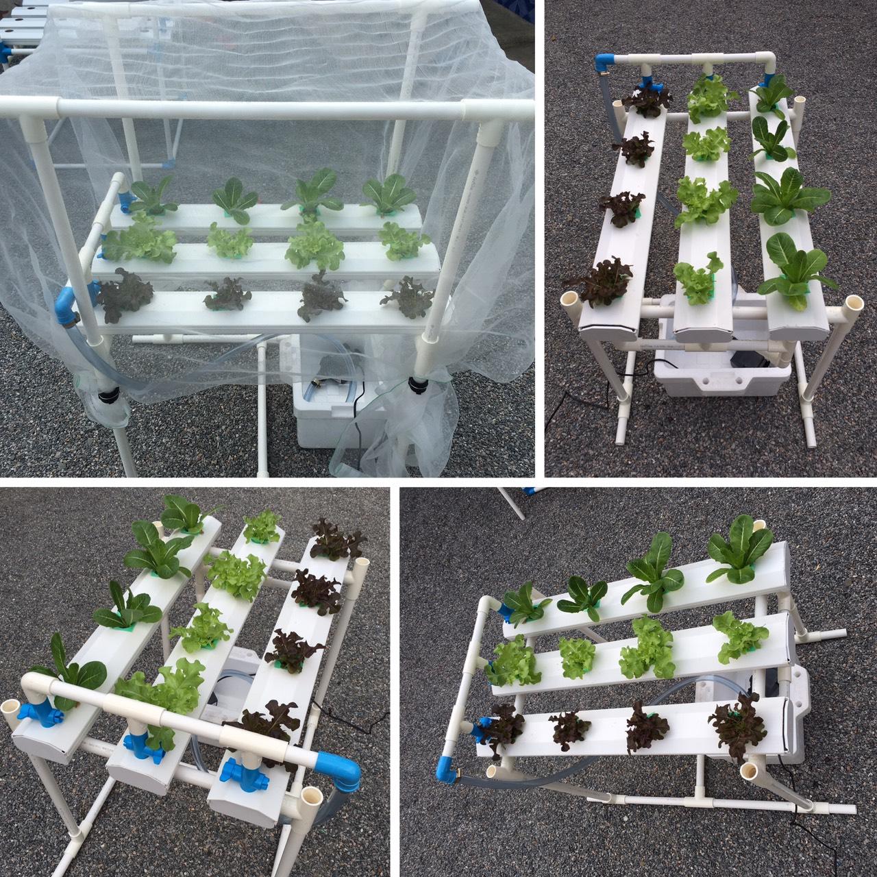 ชุดปลูกผักไฮโดรโปนิกส์ (hydroponics set)12 ช่องปลูก