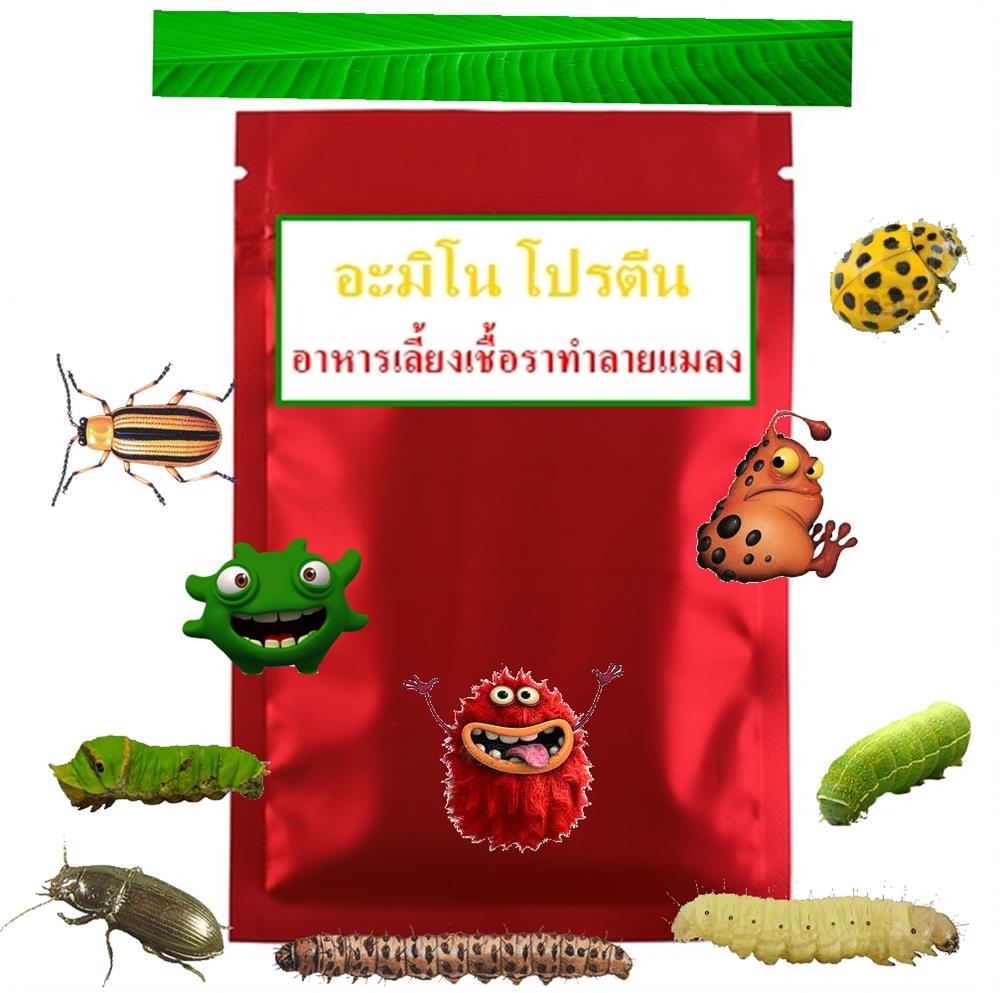 อะมิโน โปรตีน สารอาหารเลี้ยงเชื้อราทำลายแมลง