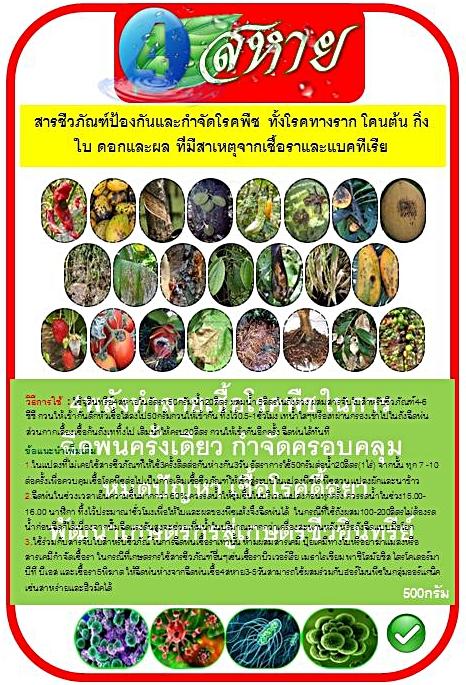 ไตรโคเดอร์มา,โรคพืช,โรคพืชที่เกิดจากเชื้อรา,โรคพืชที่เกิดจากเชื้อแบคทีเรีย,โรคพืชผัก,โรคพืชคือ,โรคข้าว,โรคของพืช,ผักสวนครัว,พืชไร่,พืชสวน,โรคพืชที่เกิดจากเชื้อไวรัส,ป้องกันและกำจัดโรคพืช,สารป้องกันและกำจัดโรคพืช,สารชีวภัณฑ์ป้องกันและกำจัดโรคพืช,สารชีวภาพป้องกันกำจัดเชื้อราและแบคทีเรีย,4สหาย,สารชีวภาพกำจัดโรคพืช,สวนเกษตรผสมผสาน,ปลอดสารพิษ