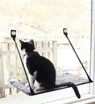 เปลแมว ติดกระจก