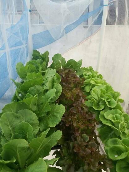 ชุดปลูกผักไร้ดิน (Hydroponics) 24 ช่องปลูก
