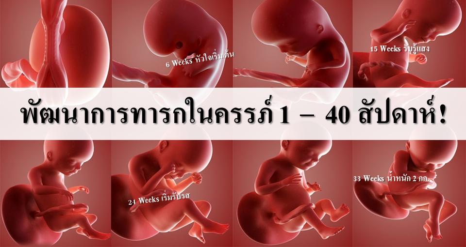 Image result for รูปทารกอยู่ในท้อง