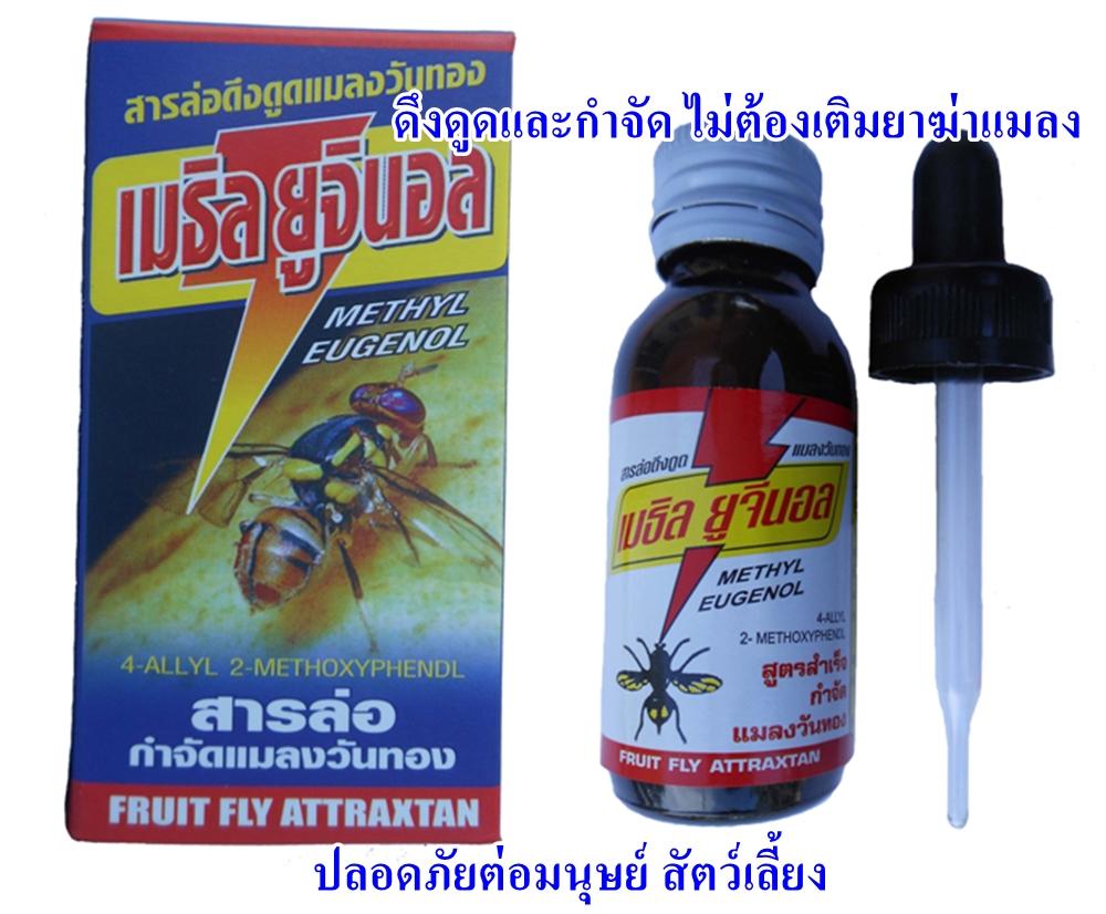 สารล่อและกำจัดแมลงวันทอง