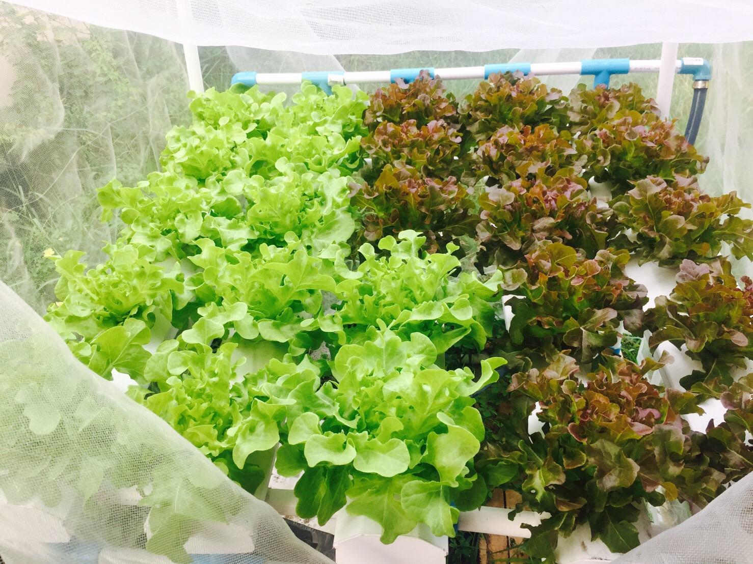 ชุดปลูกผักไฮโดรโปนิกส์ (hydroponics set)25 ช่องปลูก