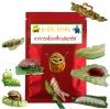 อะมิโน โปรตีน สารอาหารเลี้ยงเชื้อจุลินทรีย์