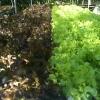 ชุดปลูกผักไฮโดรโปนิกส์ 110 ช่องปลูก