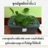 ชุดปลูกผักไฮโดรโปนิกส์ (น้ำนิ่ง) 5 ช่องปลูก (Hydroponics)
