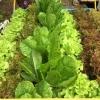 ชุดปลูกผักไฮโดรโปนิกส์ (hydroponics) 48 ช่องปลูก