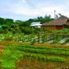 VDO เกษตรปลอดภัย VS เกษตรอินทรย์