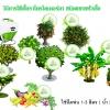 โรคพืชที่เกิดจากเชื้อรา แบคทีเรีย และไวรัส
