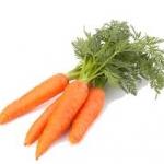เมล็ด Carrot Microgreens