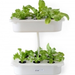 ประโยชน์ของการปลูกผักไฮโดรโปนิกส์