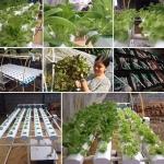 รีวิวชุดปลูกผักไฮโดรโปนิกส์ Hydroponics 60 ช่องปลูก จ.ลพบุรี ครับ