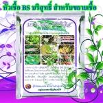 หัวเชื้อแบคทีเรีย บาซิลลัส ซับทีลิส บริสุทธิ์ ป้องกันกำจัดโรคพืช