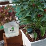 ชุดให้น้ำต้นไม้อัตโนมัติ Automatic Plant Waterers