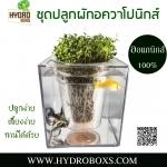ชุดทดลองปลูกผักอควาโปนิกส์(aquaponics)