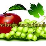 5.ประโยชน์จากสารสกัดจากเมล็ดองุ่น (Grape Seed Extract)