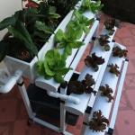 ชุดปลูกผักแนวขั้นบรรใด 22 ช่อง (Hydroponics Set)
