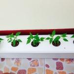 ชุดปลูกผัก 12 ช่องปลูก ปลูกได้มากกว่าผักสลัด