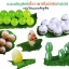 หัวเชื้อรา พาซิโลมัยซิส บริสุทธิ์ สำหรับขยายเชื้อ กำจัดไข่แมลง thumbnail 6