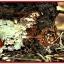 แบคทีเรีย บาซิลลัส ซับทีลิส thumbnail 6