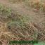 ไกลโฟน่า เอ็กตร้า สารอินทรีย์กำจัดวัชพืช thumbnail 8