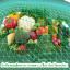 เชื้อราไตรโคเดอร์มา ชนิดน้ำ ป้องกันโรคพืช thumbnail 8