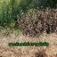 ไกลโฟน่า เอ็กตร้า สารอินทรีย์กำจัดวัชพืช thumbnail 3