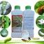 เชื้อราบิวเวอร์เรีย ชนิดน้ำ กำจัดแมลงศัตรูพืช thumbnail 4