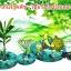 หัวเชื้อราไตรโคเดอร์มา บริสุทธิ์ สำหรับขยายเชื้อ ป้องกันโรคพืช thumbnail 9