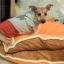 ที่นอนน้องหมา โดรายากิ thumbnail 1
