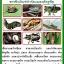 ชุดขยายเชื้อ5พลัง กำจัดแมลงศัตรูพืชและโรคพืช thumbnail 5