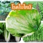 หัวเชื้อแบคทีเรีย บาซิลลัส โปร กำจัด ทำลายโรคพืช thumbnail 10