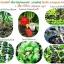 2โทน จุลินทรีย์ป้องกัน ควบคุมโรคพืชทุกชนิด thumbnail 3