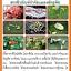 ชุดขยายเชื้อ5พลัง กำจัดแมลงศัตรูพืชและโรคพืช thumbnail 4