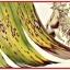 แบคทีเรีย บาซิลลัส ซับทีลิส thumbnail 12