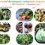 2โทน จุลินทรีย์ป้องกัน ควบคุมโรคพืชทุกชนิด thumbnail 4