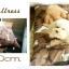 เบาะนอนน้องหมา น้องแมว thumbnail 2