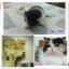 น้องแมวเปอร์เซียหน้าหล่น thumbnail 1