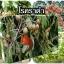 หัวเชื้อแบคทีเรีย บาซิลลัส โปร กำจัด ทำลายโรคพืช thumbnail 12