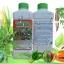 เชื้อราบิวเวอร์เรีย ชนิดน้ำ กำจัดแมลงศัตรูพืช thumbnail 3