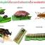 หัวเชื้อรา เมธาไรเซียม บริสุทธิ์ สำหรับขยายเชื้อ กำจัดแมลง thumbnail 12