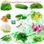 หัวเชื้อราไตรโคเดอร์มา บริสุทธิ์ สำหรับขยายเชื้อ ป้องกันโรคพืช thumbnail 7