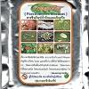หัวเชื้อราส้ม พาซิโลมัยซิส ไลลาซินัส สารชีวภัณฑ์กำจัดไข่แมลง