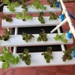 ชุดปลูกผักไร้ดิน (Hydroponics) 16 ช่องปลูก