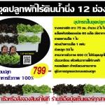 ชุดปลูกผักไร้ดินระบบน้ำนิ่ง 12 ช่องปลูก